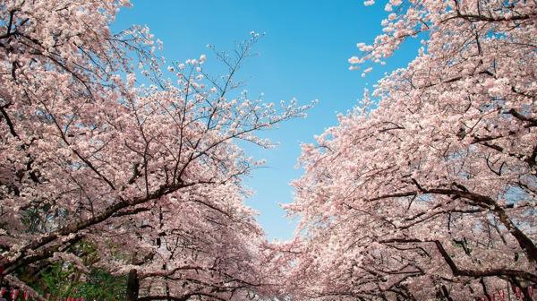 日本の魅力 動画紹介「上野 東京 Ueno Tokyo」