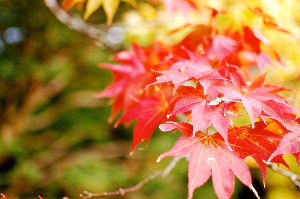 日光の紅葉 〜街並と東照宮〜 ギャラリー Travel Photo