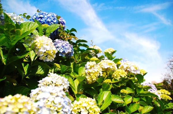 新宿御苑の3つの魅力と自然の写真