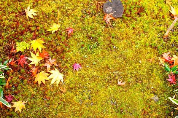 旅モノ 京都 〜 嵐山の街並と天龍寺と紅葉のなごり 〜