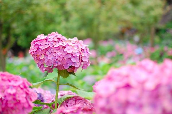 鎌倉散策♪〜餅とカフェと紫陽花〜 Daily life